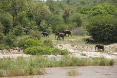 Ελέφαντες Στοκ Φωτογραφία