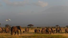 Ελέφαντες απόθεμα βίντεο