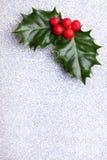 Ελαιόπρινος Χριστουγέννων με τα κόκκινα μούρα Στοκ Εικόνες