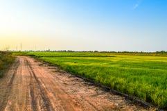 εδαφολογικός δρόμος κοντά στον τομέα ρυζιού Στοκ Εικόνες