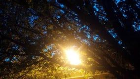 ελαφριά δέντρα Στοκ φωτογραφίες με δικαίωμα ελεύθερης χρήσης