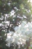 Ελαφριά μαλακή εστίαση φύσης Στοκ εικόνα με δικαίωμα ελεύθερης χρήσης
