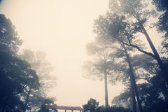 Ελαφριά ομίχλη Forrest στοκ φωτογραφίες