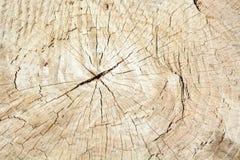 Ελαφριά φρέσκια ξύλινη σύσταση στοκ εικόνα