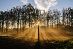 Ελαφριές ακτίνες που σπάζουν μέσω των δέντρων Στοκ εικόνα με δικαίωμα ελεύθερης χρήσης