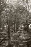 Ελαφρύ να λάμψει Θεών νεκροταφείων μέσω των δέντρων στο νεκροταφείο Στοκ Φωτογραφία