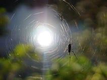 Ελαφρύ να λάμψει κάτω από την αράχνη Στοκ Φωτογραφίες
