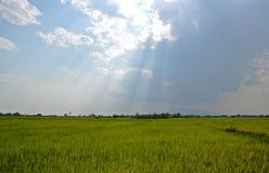 Ελαφρύ να λάμψει κάτω από τον ουρανό πέρα από τον τομέα ρυζιού Στοκ Εικόνα