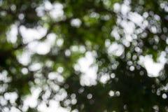 Ελαφρύ να λάμψει στο υπόβαθρο φύλλων δέντρων Στοκ Φωτογραφίες