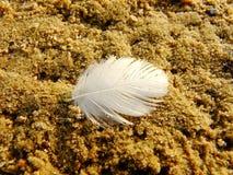 Ελαφρύ φτερό στην άμμο στοκ φωτογραφίες με δικαίωμα ελεύθερης χρήσης