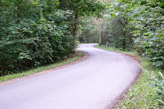 Ελαφρώς αναμμένος δρόμος στο δάσος Στοκ εικόνα με δικαίωμα ελεύθερης χρήσης