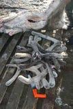 Ελαφόκερες βελούδου του ταράνδου Κυνήγι άνοιξη caribou Στοκ Εικόνες