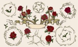 Ελαφόκερες και peonies περιπλεγμένη κορδέλλα Στοκ εικόνες με δικαίωμα ελεύθερης χρήσης