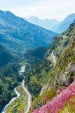 Ελβετική άποψη Apls με τα άγρια ρόδινα λουλούδια Στοκ εικόνες με δικαίωμα ελεύθερης χρήσης