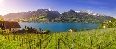 Ελβετικός αμπελώνας που οριοθετείται από Walensee Lake και τις Άλπεις Στοκ φωτογραφία με δικαίωμα ελεύθερης χρήσης