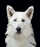 Ελβετικός χαμηλός πολυ σκυλιών ποιμένων απεικόνιση αποθεμάτων
