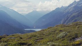 Ελβετικό λιβάδι της πράσινης χλόης και των ζωηρόχρωμων λουλουδιών, αιχμές υψηλών βουνών στο υπόβαθρο Απόμακρος ποταμός Νεφελώδης  απόθεμα βίντεο