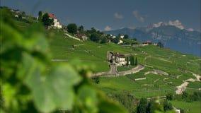 Ελβετικό τοπίο βουνών απόθεμα βίντεο