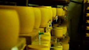 Ελβετικό τυρί στο γαλακτοκομείο απόθεμα βίντεο