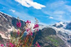 Ελβετικό Apls με τα άγρια ρόδινα λουλούδια Στοκ εικόνες με δικαίωμα ελεύθερης χρήσης