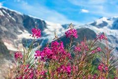 Ελβετικό Apls με τα άγρια ρόδινα λουλούδια Στοκ εικόνα με δικαίωμα ελεύθερης χρήσης
