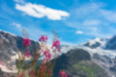 Ελβετικό Apls με τα άγρια ρόδινα λουλούδια Στοκ Φωτογραφίες