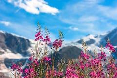 Ελβετικό Apls με τα άγρια ρόδινα λουλούδια Στοκ φωτογραφία με δικαίωμα ελεύθερης χρήσης