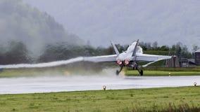 Ελβετικό Hornet Στοκ Εικόνα