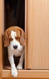 Ελλείπον σκυλί Στοκ Φωτογραφία