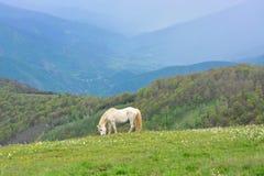 Ελεύθερα άγρια άλογα στο βουνό Στοκ Εικόνες