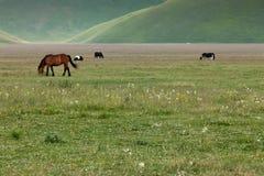 ελεύθερα άλογα Στοκ Φωτογραφίες