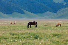 ελεύθερα άλογα Στοκ Εικόνα