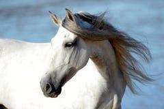 Ελεύθερη εκπαίδευση αλόγου σε περιστροφές σε μια ισπανική παραλία στοκ φωτογραφία με δικαίωμα ελεύθερης χρήσης