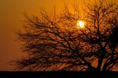 δεδομένου ότι το σχέδιο ενσωματώνει τη χρήση δέντρων σύστασης σκιαγραφιών στοκ εικόνα