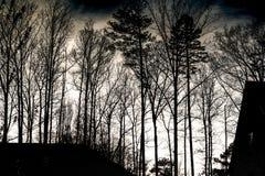 δεδομένου ότι το σχέδιο ενσωματώνει τη χρήση δέντρων σύστασης σκιαγραφιών Στοκ φωτογραφία με δικαίωμα ελεύθερης χρήσης