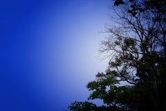 δεδομένου ότι το σχέδιο ενσωματώνει τη χρήση δέντρων σύστασης σκιαγραφιών Στοκ Φωτογραφίες