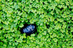 Ελπίδα - κείμενο στην πέτρα στο πράσινο τριφύλλι στοκ εικόνα