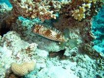 Εδρεύουσα Ερυθρά Θάλασσα στοκ φωτογραφία με δικαίωμα ελεύθερης χρήσης