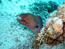 Εδρεύουσα Ερυθρά Θάλασσα στοκ φωτογραφίες με δικαίωμα ελεύθερης χρήσης