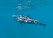 δελφίνια τρία Στοκ φωτογραφία με δικαίωμα ελεύθερης χρήσης