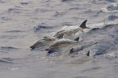 δελφίνια Στοκ φωτογραφία με δικαίωμα ελεύθερης χρήσης