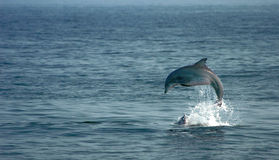 δελφίνι Στοκ φωτογραφία με δικαίωμα ελεύθερης χρήσης