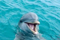 δελφίνι Στοκ Εικόνες