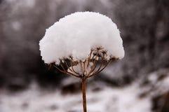 εδώ χειμώνας στοκ φωτογραφίες