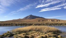 Ζάλη της ανοικτής πεδιάδας με το ηφαίστειο στο υπόβαθρο, νότια Βολιβία Στοκ εικόνα με δικαίωμα ελεύθερης χρήσης