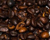 ζάχαρη συστατικών καφέ κανέλας σοκολάτας φασολιών αρώματος γλυκάνισου cardamon Στοκ Εικόνα