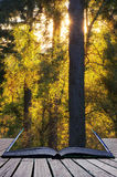Ζάλη του δονούμενου τοπίου φθινοπώρου της ηλιοφάνειας μέσω των δέντρων στο φ Στοκ Εικόνες
