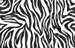 Ζέβες δέρμα, σχέδιο λωρίδων Ζωική τυπωμένη ύλη, γραπτή λεπτομερής και ρεαλιστική σύσταση ελεύθερη απεικόνιση δικαιώματος