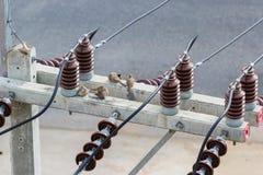 Ζέβες περιστέρι στην ηλεκτρική θέση Στοκ φωτογραφία με δικαίωμα ελεύθερης χρήσης