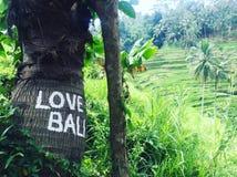 Ζήστε αγάπη ρυζιού Στοκ Εικόνα